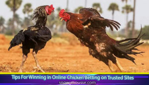 Tips-For-Winning-in-Online-Chicken-Betting-on-Trusted-Sites